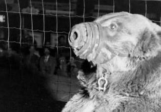 Ретро. Нокаут від ведмедя (ФОТО)