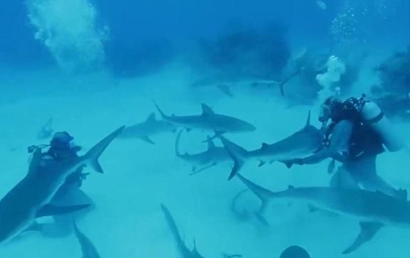 Майк Тайсон поплавав з акулами для програми на Діскавері (ВІДЕО)