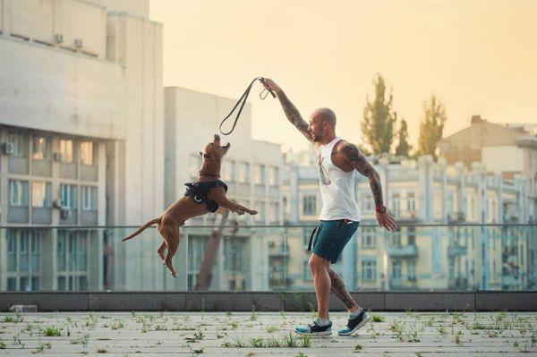 Пес, про якого мріє будь-якого спортсмен. Ілля Примак знайомить зі своїм Котто (ВІДЕО)